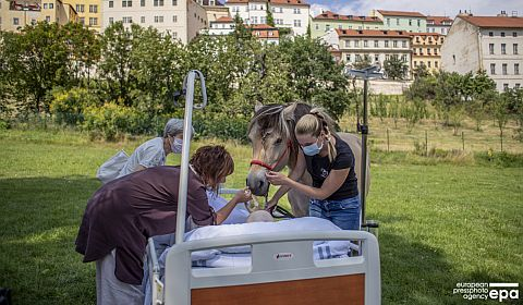 Horse touch therapy for patients in Prague's hospital